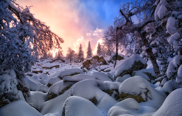 Picture winter, snow, sunset, spruce