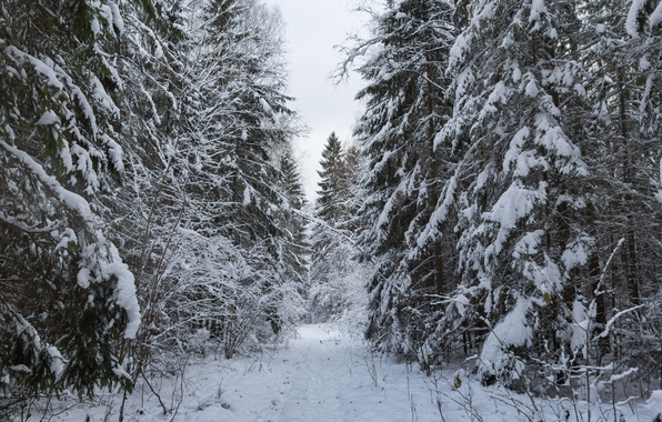 Photo wallpaper forest, road in the forest, ate, snow, snowy road, winter, tree, snow