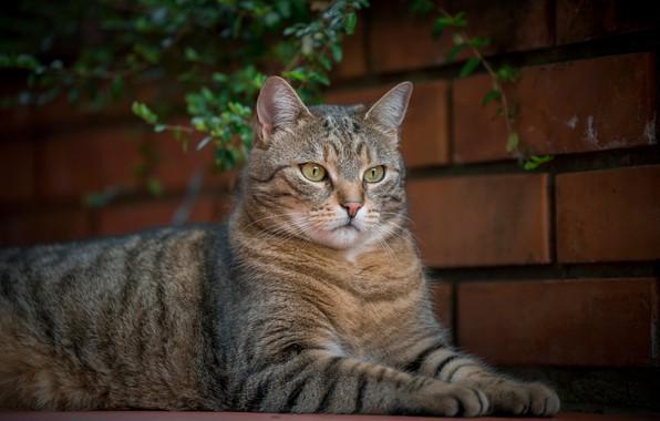 Picture cat, look, portrait, cat