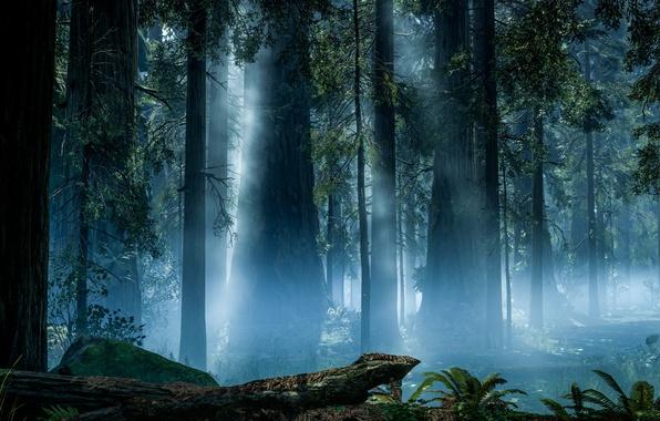 Picture game, Forest, Electronic Arts, Rendering, Rendering, DICE, Forest, Star Wars: Battlefront, Endor, Endor