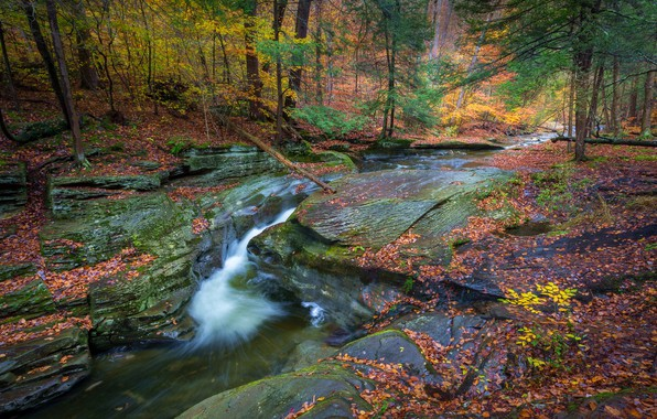 Wallpaper autumn, forest, river, waterfall, PA, Pennsylvania