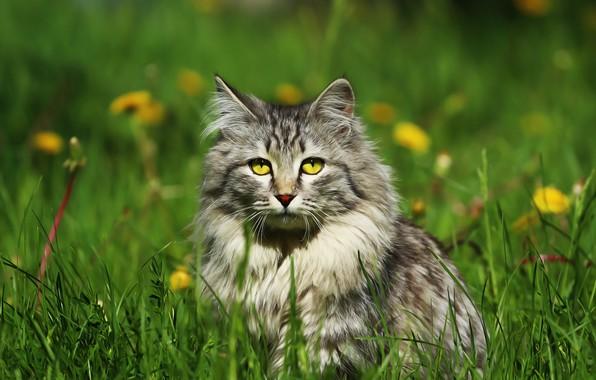 Picture eyes, cat, weed, dandelions