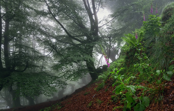 Picture forest, flowers, fog
