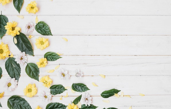 Picture petals, chrysanthemum, flowers
