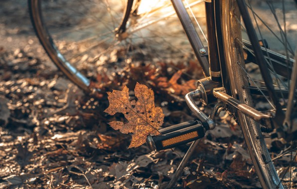 Picture autumn, leaves, bike