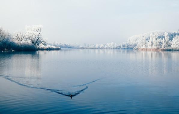 Picture winter, lake, bird