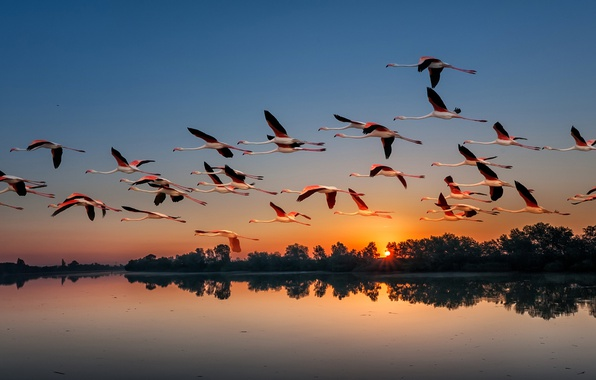 Picture sunset, birds, nature, lake, pack, Flamingo, flights