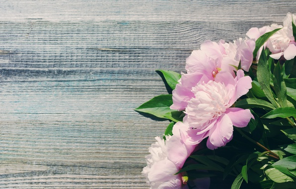 Picture bouquet, pink, wood, pink, flowers, beautiful, peonies, peony
