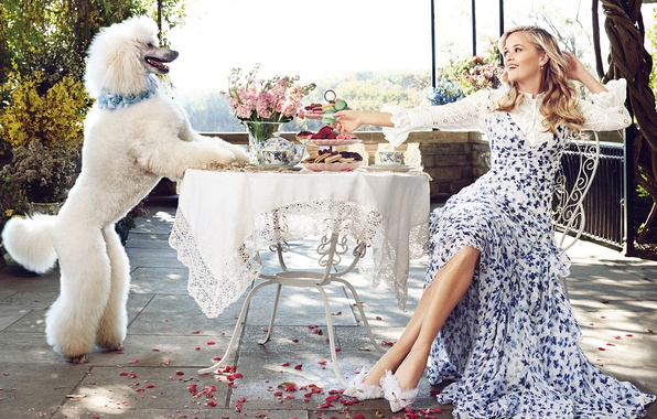 Picture white, flowers, smile, food, dog, makeup, garden, dress, hairstyle, blonde, shoes, sitting, poodle, rose petals, …