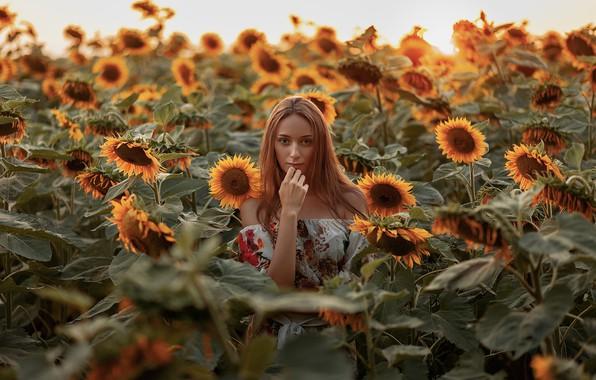 Picture field, sunflowers, mood, Natalie, Alexander Kozyura