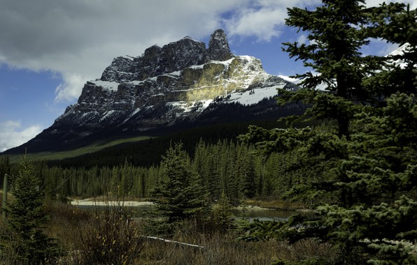 Picture nature, mountain, coniferous trees