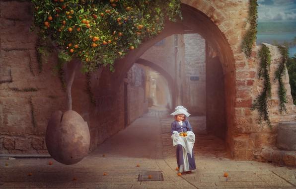 Picture tree, oranges, arch, child, Orange tree