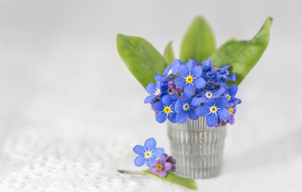 Picture background, a bunch, forget-me-nots