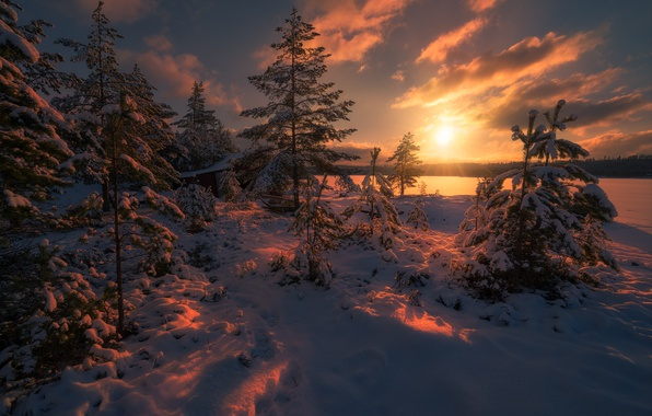 Picture winter, forest, the sun, light, snow, trees, nature, Norway, tree
