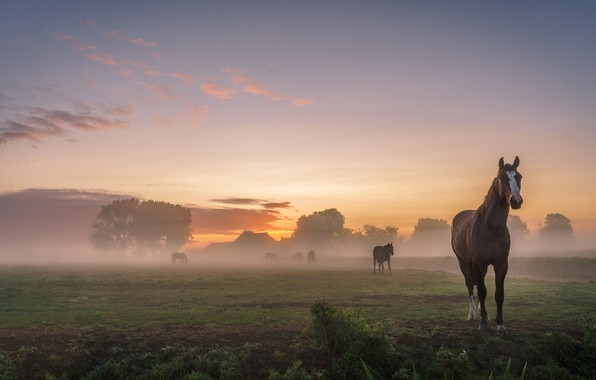 Picture field, summer, the sky, landscape, nature, fog, dawn, horses, morning, village, horse, pasture, houses