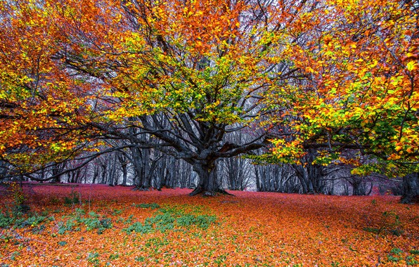 Picture autumn, forest, tree