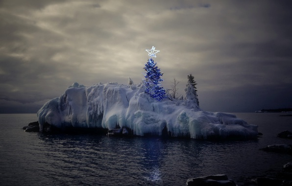 Picture sea, holiday, the evening, tree