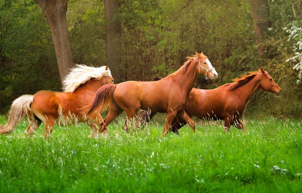 Picture grass, nature, animal, horse, running