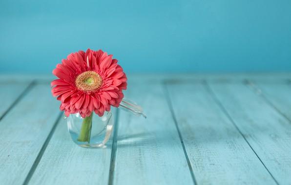 Picture flower, vase, flower, gerbera