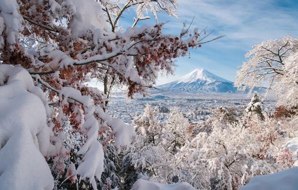 Picture winter, snow, trees, branches, the volcano, Japan, panorama, Japan, Mount Fuji, Fuji, Fujiyoshida, Fujiyoshida, Yamanashi