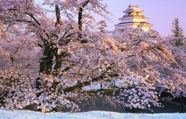 Picture branches, Park, castle, Japan, Sakura, Japan, flowering, Fukushima, Fukushima, Aizuwakamatsu, Aizuwakamatsu Castle, Tsuruga Castle, The …