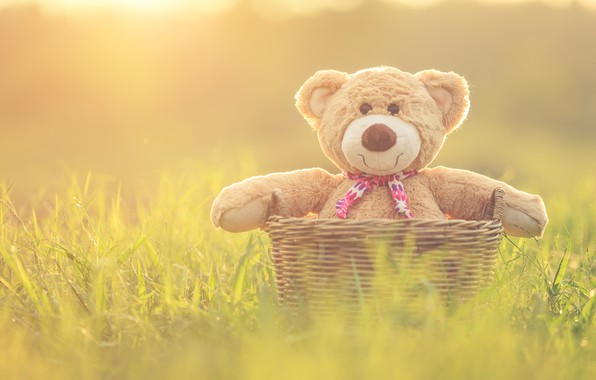 Picture basket, toy, bear, bear, vintage, bear, retro, teddy, lonely, cute, lonely