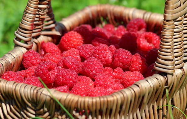 Photo wallpaper beauty, nature, cottage, berries, delicious, raspberry, harvest, summer, vitamins, basket, berry