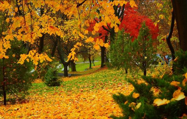 Сентябрь разбрызгал золото по кронам, листва пахнет терпким вином.  - Страница 2 Autumn-fall-park-colors-osen-park-derevia-trees