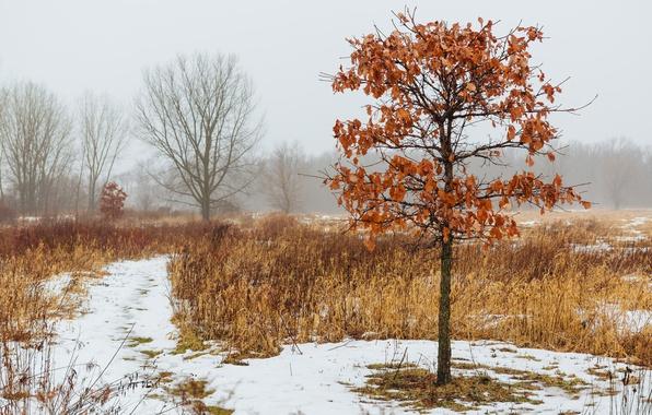 Picture winter, snow, tree