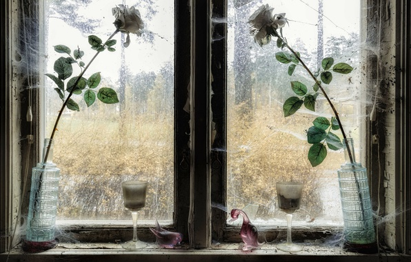 Picture flowers, roses, window