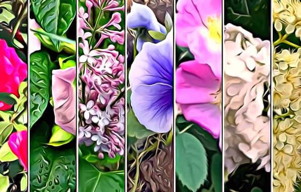 Picture leaves, flowers, rendering, collage, petals, picture