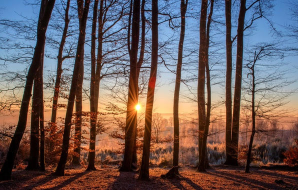 Picture frost, autumn, forest, the sun, trees, fog, dawn, morning