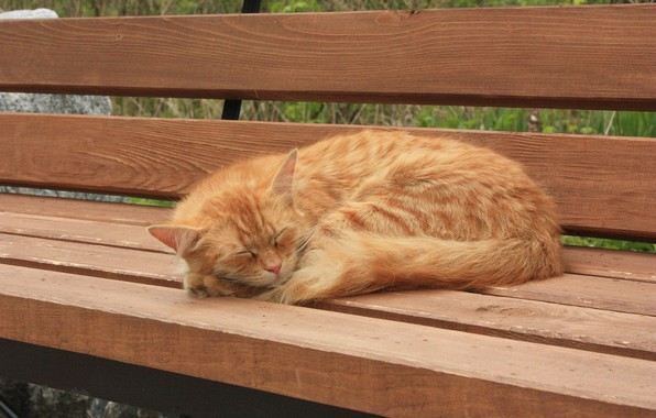 Picture sleeping, on the bench, red cat
