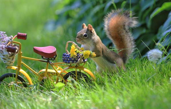 Picture summer, grass, flowers, nature, bike, animal, protein, dandelions, basket, animal, rodent