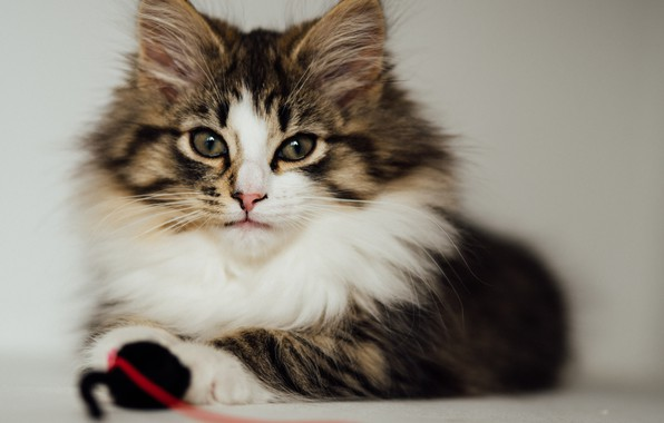 Picture cat, cat, look, fluffy