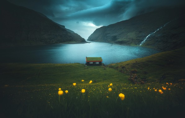 Picture grass, flowers, mountains, house, the fjord