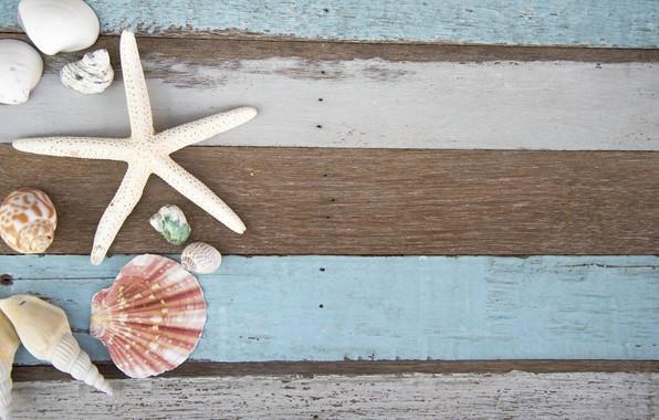 Picture shell, summer, wood, marine, starfish, composition, seashells