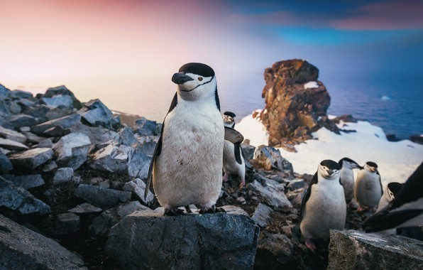 Picture sea, the sky, snow, rocks, pack, penguins