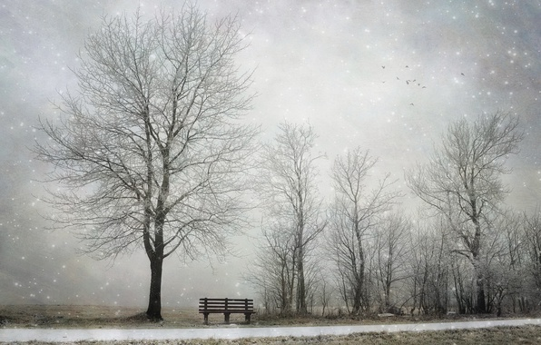 Picture winter, snow, tree, bench