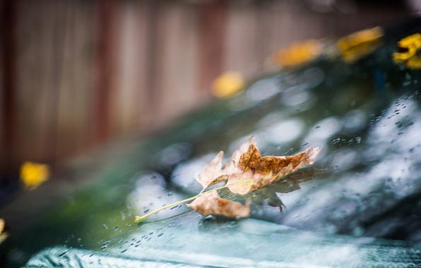 Picture autumn, glass, drops, sheet, rain, bokeh