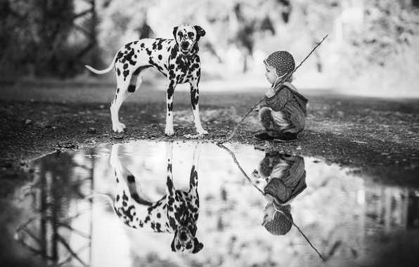 Picture reflection, child, dog, boy, puddle, Dalmatian, black and white photo