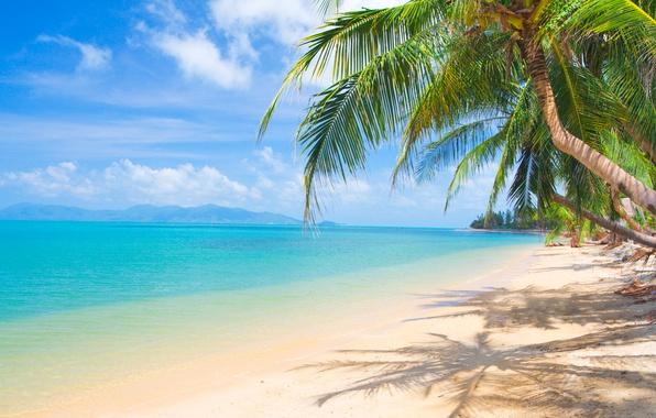 wallpaper sand  sea  beach  the sun  palm trees  shore