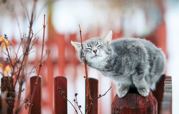 Picture cat, cat, branches, the fence