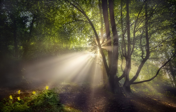Picture forest, summer, the sun, rays, light, flowers, nature, tree