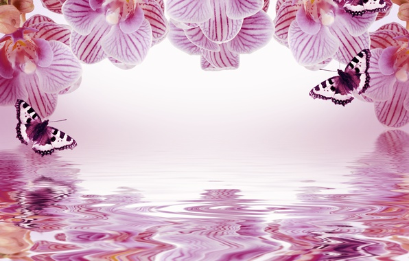 Picture butterfly, flowers, reflection, background, frame, orchids