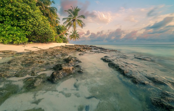 Picture beach, summer, tropics, palm trees, Sea