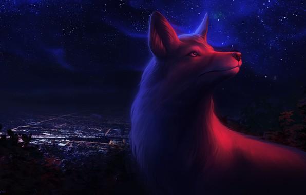 Picture night, the city, Fox, by Ciorano