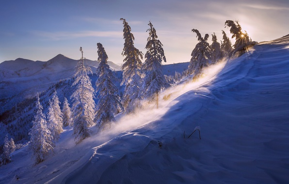 Picture winter, the sun, light, snow, nature, the wind, The frost a minus of 43, Burlinski …