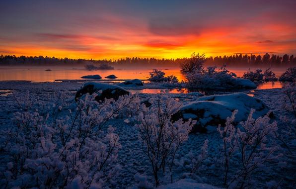Picture winter, snow, sunset, lake, Sweden, the bushes, Sweden, Lapland, Arjeplog, Lappland, Arjeplog, Lake Hornavan, lake …
