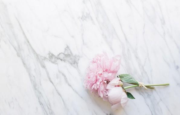 Picture flowers, bouquet, marble, pink, flowers, peonies, peonies, tender, marble